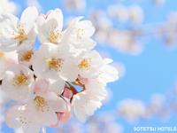 春のフレッサスペシャルプラン(食事なし)
