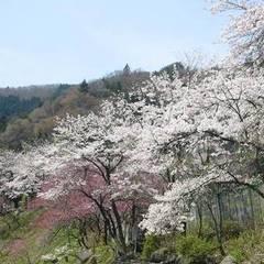 『春得』春の食材★鶏ちゃんと山菜たっぷりの2食付きプラン