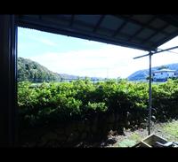 【4名以上限定】超広々和室で格安素泊まり!¥3,500〜◆全日同料金◆グループでのご旅行に♪