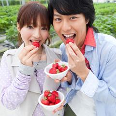 【イチゴ狩り体験】イチゴ食べ放題♪季節のミニ海鮮丼・淡路牛しゃぶしゃぶ♪サンライズ御膳付きプラン