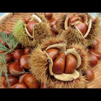 南会津で秋の味覚を楽しもう♪栗拾い体験で想い出つくり☆【1泊2食+栗のお土産付き】