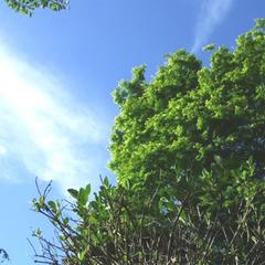 【赤城自然園入園券&お弁当付】『赤城自然園』で豊かな自然に触れる!四季を感じる旅