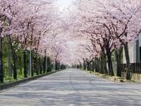 ☆花見スポット☆桜巡り☆東伊豆の桜を見に行こう☆【二食付】