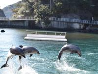 イルカを見に行こう☆【下田海中水族館】入園券付き♪一泊2食バイキングプラン♪