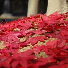 【紅葉】鶏足寺と湖国料理を愉しむ―。<お部屋食>★北近江リゾート温泉無料利用OK♪