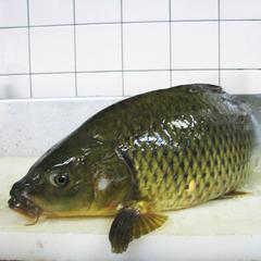 【湖魚づくし】絶品☆琵琶湖をまるごと満喫♪新鮮な食材のみ厳選!
