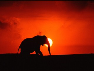 『夏休み限定』★夏得★ 大人気!!!☆『【ナイトツアー〈夜のサファリパーク〉付】』板長特選会席プラン