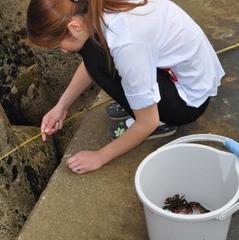 ☆期間限定☆北茨城の海の恵み☆とれたての生うに(がぜ)付☆もちろんお刺身なども付いています。