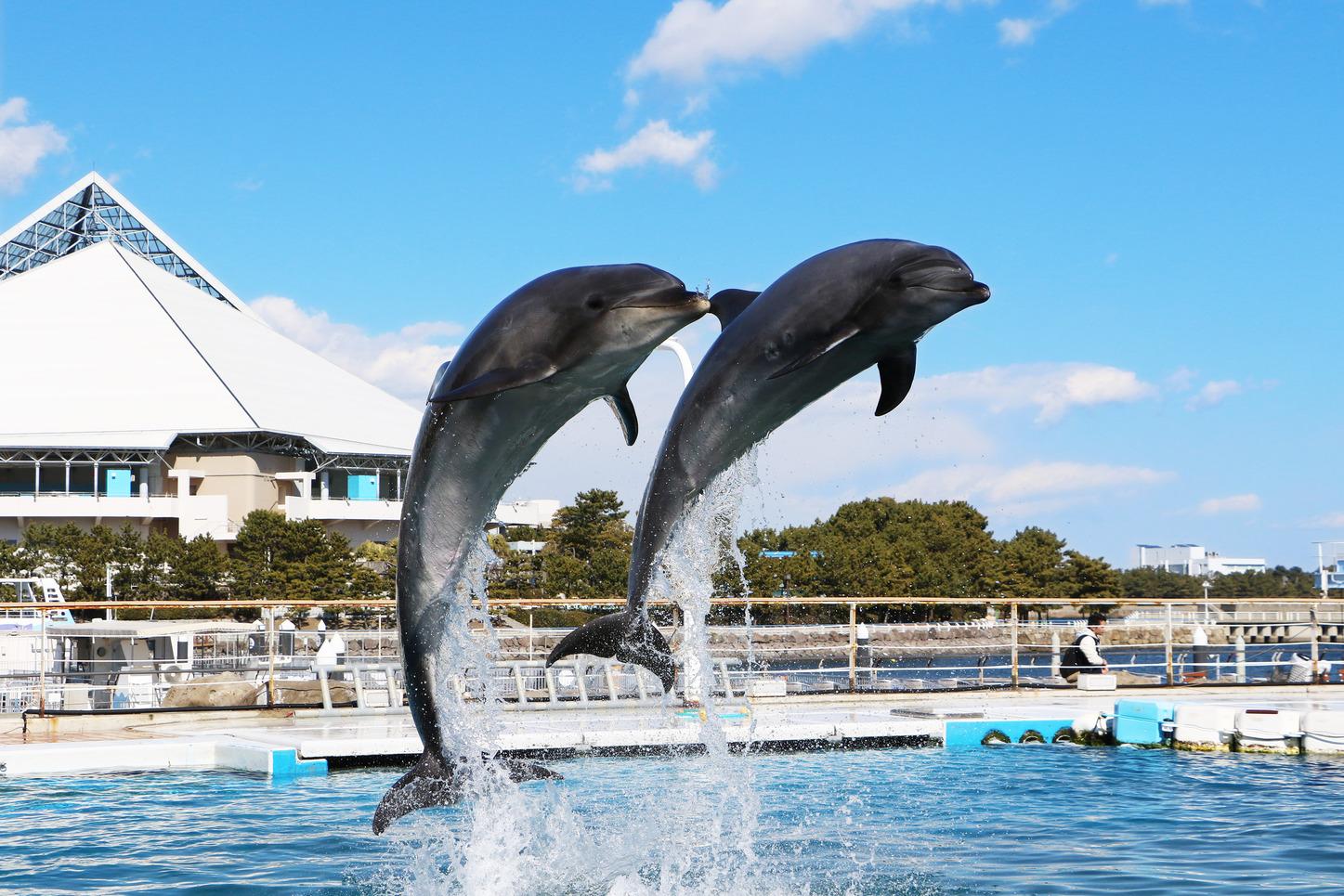 八景島シーパラダイスプラン(水族館入場券付)