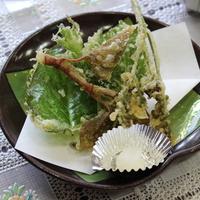 【期間限定嬉しい特典付き♪】 山陰浜田の海の幸お刺身食べ尽くしプランのどぐろ付