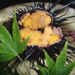 【期間限定】獲れたて壱岐の味覚!旬の天然ムラサキウニのフルコースを食す♪【ウニ祭り】