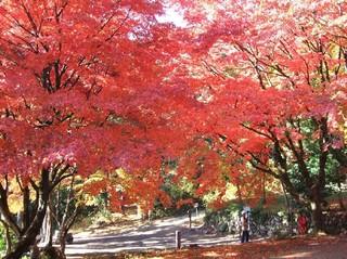 里山の秋堪能!北近江随一のもみじの名所「鶏足寺」秋の紅葉散策プラン