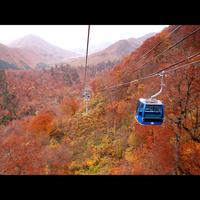 【紅葉ゴンドラチケット無料】空中散歩で秋色の山々を一望♪舞茸土瓶蒸し&とちぎ和牛陶板焼きで秋を堪能!