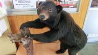 【巡るたび、出会う旅。東北】〜熊と山菜に出会う旅〜山の恵みと郷土の味を堪能
