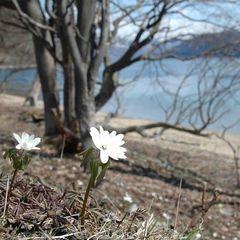 【3/1〜4/28】雛祭りや春のお祝い事に〜パティシエ特製『桜ロールケーキ』付き(夕食:ブッフェ)
