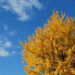 洞爺湖の絶景を貸し切る〜天空貸切温泉プラン(夕食:和風フレンチ)