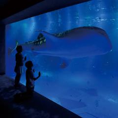 【ファミリープラン】 『のとじま水族館』入場券付き♪ ご夕食は、北陸の旬の味覚をご堪能!