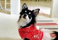 ♪愛猫、愛犬と泊まるプラン☆ペットと一緒に!☆4つ星以上☆ 【秋得】【冬得】☆】☆全室WiHi☆