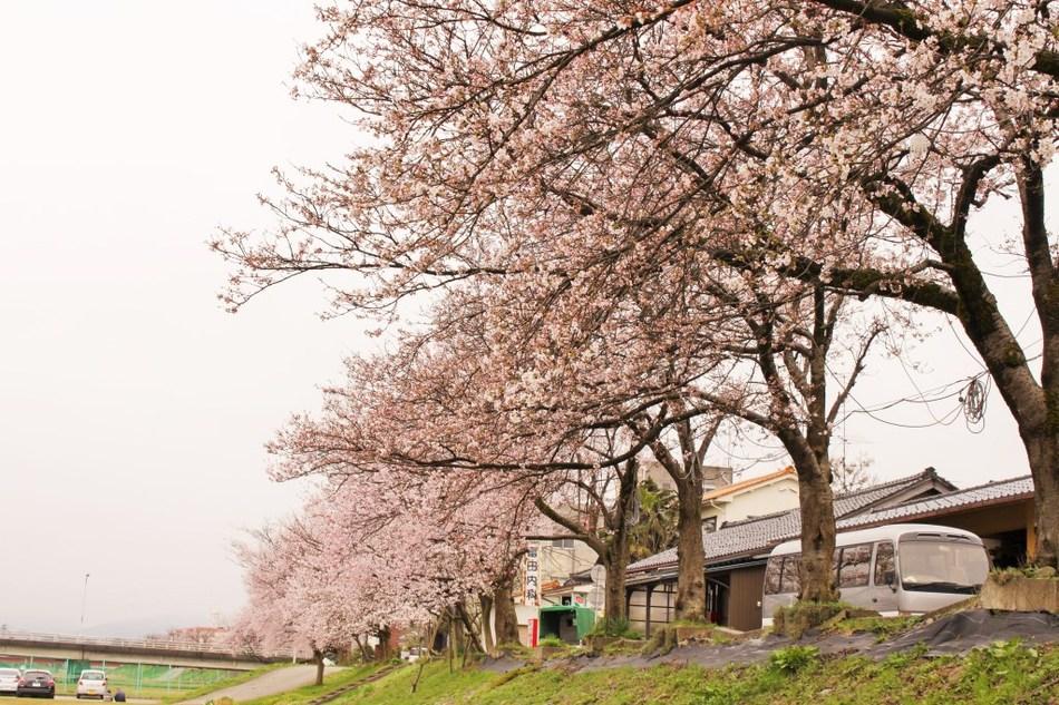 Miyakawa image
