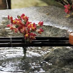 美肌♪すっぽん鍋・飛騨牛陶板焼☆温泉とすっぽん!Wでお肌ツルツル 嬉しいプラン