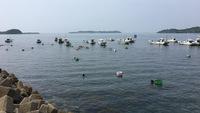 人気No.1!≪2食付・スタンダード≫島の恵★近海の獲れたて鮮魚を堪能!