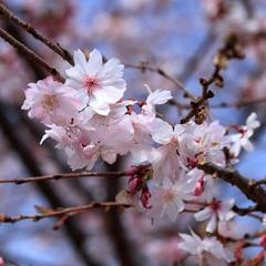 【エコ連泊】エコで京都にエエ古都を!☆市バス1日乗車券プレゼント☆朝食付