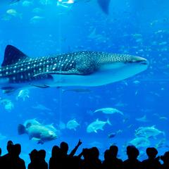 沖縄美ら海水族館チケット付き★ジンベエザメとマンタに出会う旅♪(朝食付き)