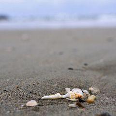 【特典いっぱい!】夏だ!海だ!★7大特典付★夏休みファミリープラン