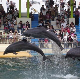 東尋坊観光の方におすすめ 越前松島水族館入館チケット付プラン