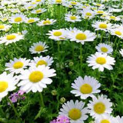 ◆女子旅◆土曜限定!90分の至福のとき☆植物のピュアな香りに包まれて・・・<特典>