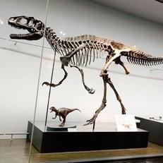 40体の恐竜の化石が待っている!恐竜博物館チケット付プラン(朝食付)