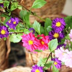 【素泊まり】 花とおもてなしの宿『竹屋』 自由な時間を邪魔しません 素泊りプラン