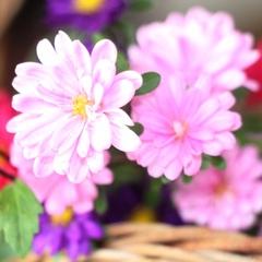 【女子旅】花いっぱい、アットホームな宿で楽しい思い出を☆彡特典付女子会プラン【1泊2食】