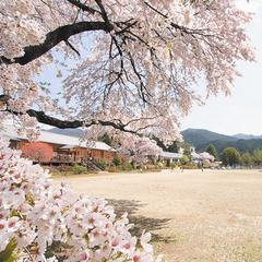 【2018年4月14日限定】桜祭り前夜祭◆弦楽四重奏会コンサート&洋食バイキングの特別限定プラン!