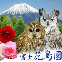 【富士花鳥園*チケット付プラン】ふくろうと遊ぼう!花はいつでも満開です!!