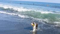 【ペット連れ】ドッグラン&海までお散歩でワンちゃんご機嫌♪人気バイキングと湘南の休日を満喫/夕食付