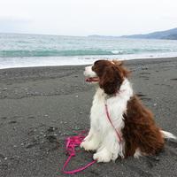【ペット連れ】ドッグラン&海までお散歩でワンちゃんご機嫌♪人気の朝食バイキングを満喫/朝食付
