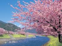 早咲きの河津桜を堪能!!伊勢海老アワビ刺身付グレードアッププラン*駅近の宿!!電車でのお出かけに便利