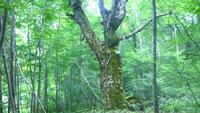 2食付き◆自然豊かな世界遺産・白神山地の麓に佇む宿