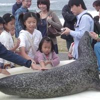 ★越前松島水族館入場券付き★イルカにペンギン♪水槽の上を歩ける水上ウォークも!