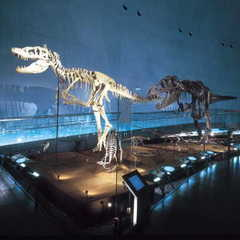 ファミリー旅行【1泊2食】 ★大人気【恐竜博物館入場券付】