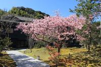 【直前割】河津桜花見と温泉三昧伊豆への旅  2名様利用スタンダードプランを最大14,000円オフ