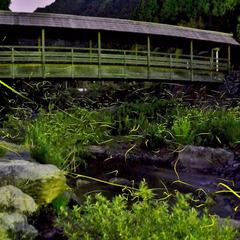 ♪ホタル♪河辺の自然を満喫♪ノスタルジー&ホタル満喫
