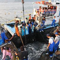 【若狭コース】当館人気の定番プラン☆若狭の恵みがつまった獲れたての魚貝類でおもてなし!