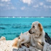 ペットと一緒に『沖縄旅行を満喫』★【1匹専用】宿泊プラン【2連泊以上限定】