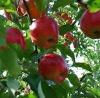 【秋旅】奥久慈☆恋するりんご りんごづくしプラン