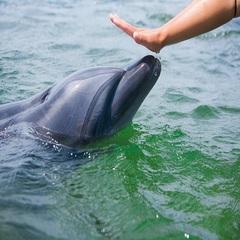 【期間限定】ドルフィンビーチ2018◆イルカと触れ合って思い出満点◆島料理を満喫♪島旅プラン