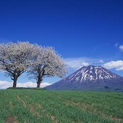 【3・4月限定】1泊限定☆ニセコ春旅のご予約は今がお得♪≪素泊≫
