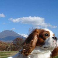 【ペットプラン★1泊〜OK】愛犬と一緒♪優雅なニセコ旅を!<素泊>
