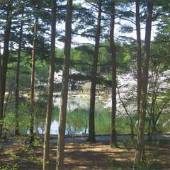 【2食付】とろみのある天然温泉と豊かな森に癒される♪自然いっぱいの大芝高原でリフレッシュ